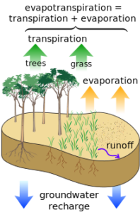 Water leaves the surface of the earth through evapotranspiration - the combination of evaporation from surfaces and transpiration from plants.